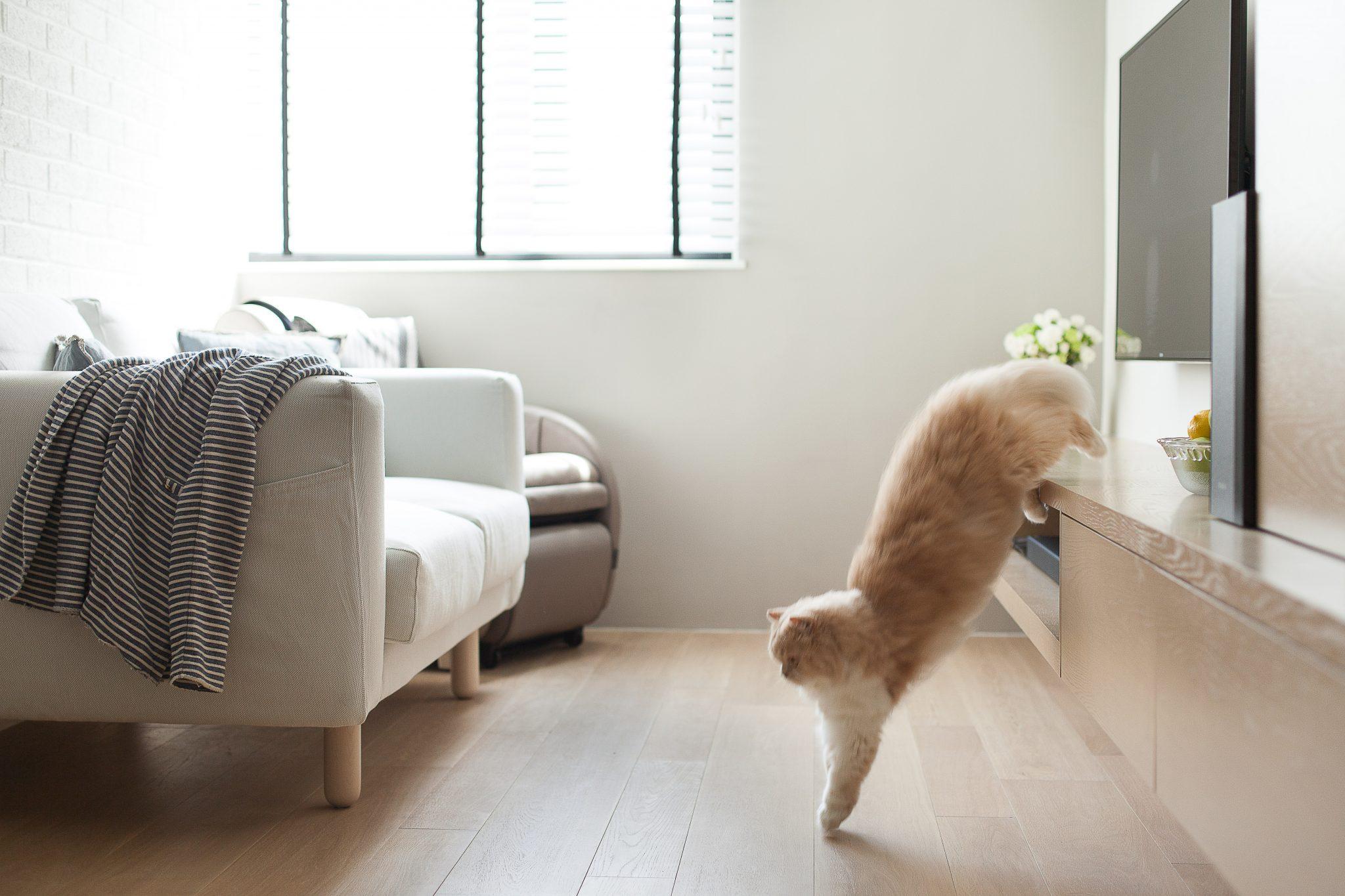 Studio Flat Design HK-High Street-Living Room